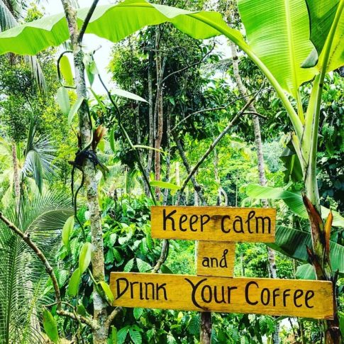 Where do coffee beans grow, keep calm and drink your coffee sign