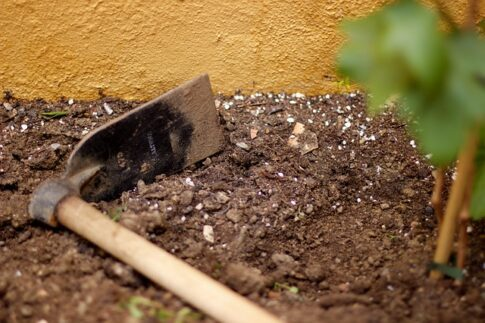 How to dispose of coffee grounds, garden soil